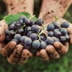 Uvas de libertad: el vino mendocino que se elabora en una cárcel