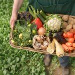 Mitos y verdades de la comida orgánica