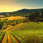 Diccionario del vino: ¿qué es el terroir?