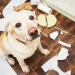 ¿Te regalaron un perro? Estas son las 4 cosas que tenés que cambiar en tu cocina
