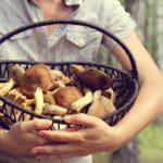 Turismo y gastronomía: a la caza de hongos comestibles