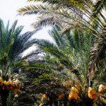 Alimentación silvestre: las frutas más exóticas de la Mesopotamia argentina