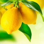 MESA de invierno: se vienen los limones