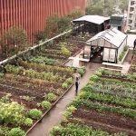 Un restaurant en la terraza de un edificio, la huerta inesperada para comensales y vecinos