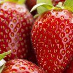 Llegan las frutillas, manjar supremo de primavera