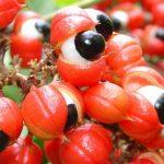 Guaraná, la semilla que excita más que el café