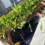 Huertas hidropónicas: una tendencia que crece sin parar