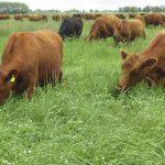 Carnes de pastura: todos los secretos del bife artesanal