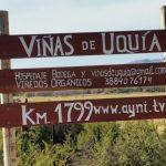El vino más alto del mundo pertenece a una bodega de Jujuy