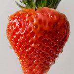 La frutilla perfecta cuesta 6 dólares y los grandes chefs se desviven por tenerla