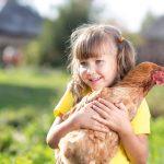 El restaurant que propone a sus clientes adoptar gallinas destinadas al matadero
