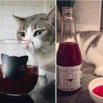 Vino para gatos: ideal para brindar con tu mascota