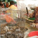 Coronavirus: China suspende el consumo de animales salvajes