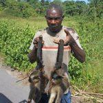 Carne salvaje, peligro latente: exigen legislación más estricta a partir del coronavirus