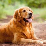 Coronavirus: el video viral de un perro que le lleva la comida a una paciente de riesgo