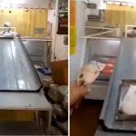 La carnicería de Córdoba que se hizo famosa por su increíble sistema de distanciamiento social
