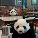 Osos panda de peluche, la divertida idea para que los clientes no se sientan solos en un restaurant