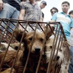 China: comenzó la fiesta de la carne de perro a pesar de los antecedentes del coronavirus