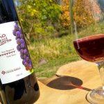La Fiesta del Vino de la Costa de Berisso se convierte en la primera online de América latina