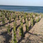 Vinos oceánicos, la última tendencia en la viticultura argentina