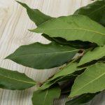 Laurel: de Grecia y Roma a la olla, historia de una planta clave en la cocina