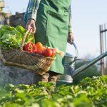 Primavera: frutas y verduras que llegan con la nueva estación