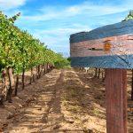 Vino argentino: las bodegas, más divididas que unidas, enfrentan una oportunidad histórica para el comercio exterior