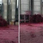 Drama en una bodega: se rompió un tanque y se derramaron 50 mil litros de vino
