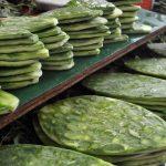 Cactus, el alimento del futuro que muchos todavía no saben que se come