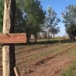 Hizo traer 400 plantas desde Mendoza y ahora posee un viñedo propio en Santa Fe