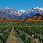 Buscan crear la Ruta del Vino más larga del mundo entre la Argentina y Chile