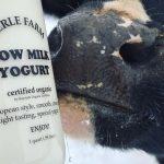 El yogur que tiene en cada frasco los nombres de las vacas ordeñadas para elaborarlo