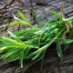 Estragón: auge y caída de la hierba que fue protagonista en la cocina