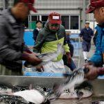 Fugu, el peligroso pez globo que se convirtió en delicatessen, otra víctima de la pandemia