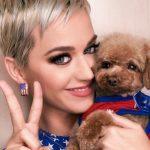 Katy Perry anunció que hará vegano a su perro: las consecuencias que podría tener ese cambio de alimentación