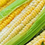 Guerra del maíz: todos los datos para entender una nueva disputa entre el gobierno argentino y el campo