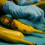 Operan a una banana a distancia, el experimento que se convertirá en realidad para humanos en muy poco tiempo