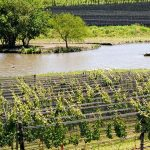 Vino argentino: habilitan una nueva zona geográfica para la producción