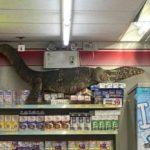 Un lagarto gigante se metió en un supermercado y lo filmaron trepándose a una góndola