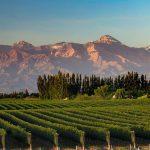 Vino argentino: la realidad de la industria vitivinícola más allá del Malbec