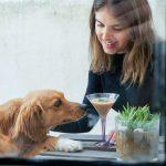 Tragos para perros, la tendencia que llega para los dueños más sofisticados de mascotas