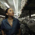 De un compost a nuestra mesa: paso a paso de la producción de hongos, un alimento clave para nuestra cocina