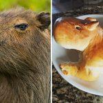 """Carpincho de pan casero, la receta que se hizo viral en las redes: """"Ahora me da lástima comerlo"""""""